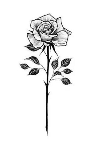 玫瑰纹身手稿