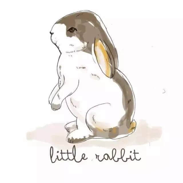兔子纹身手稿