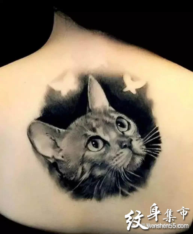 猫咪纹身,猫咪纹身手稿图案