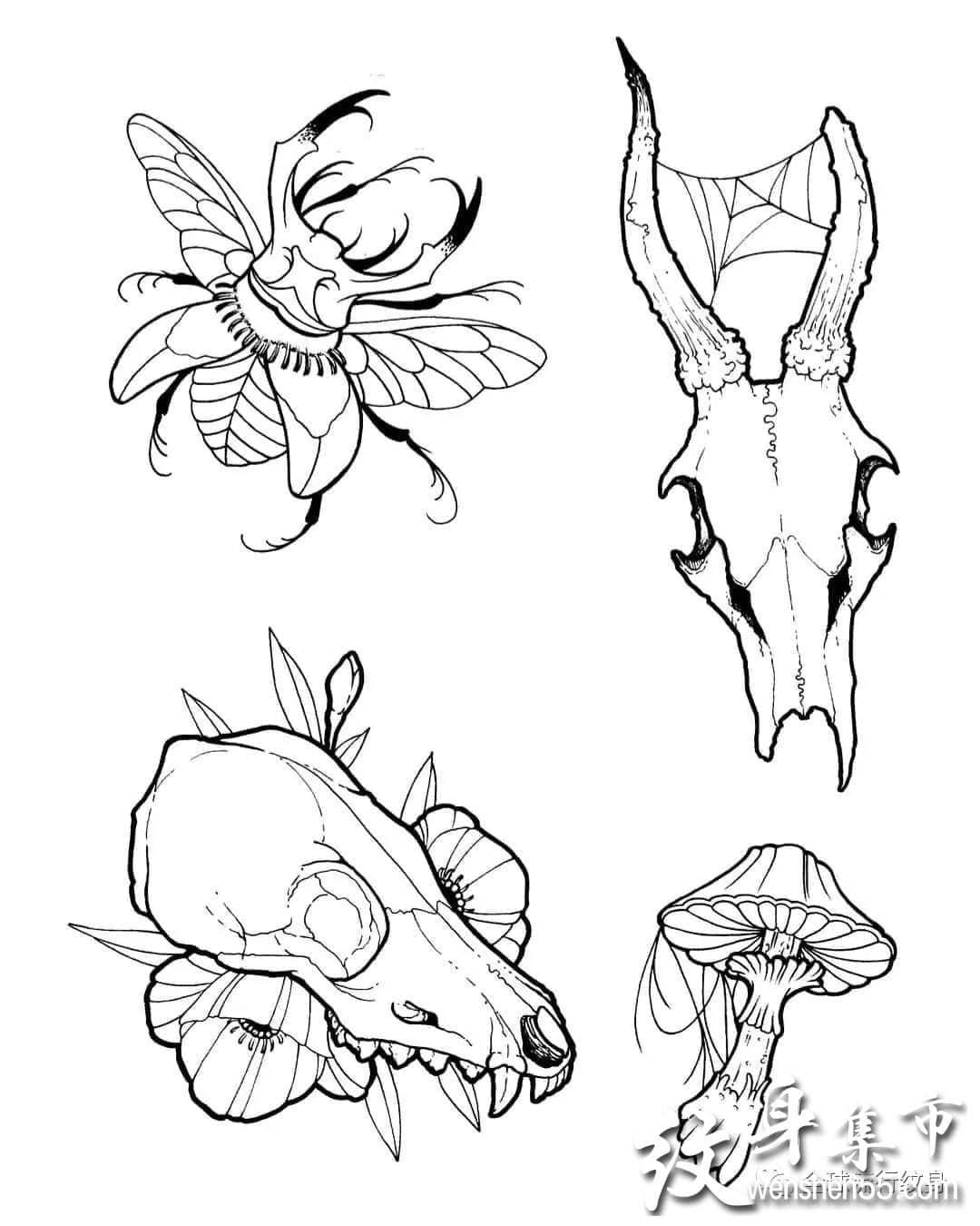 甲虫纹身,甲虫纹身手稿