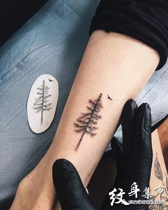 松树纹身,松树纹身手稿,松树纹身手稿图案大全