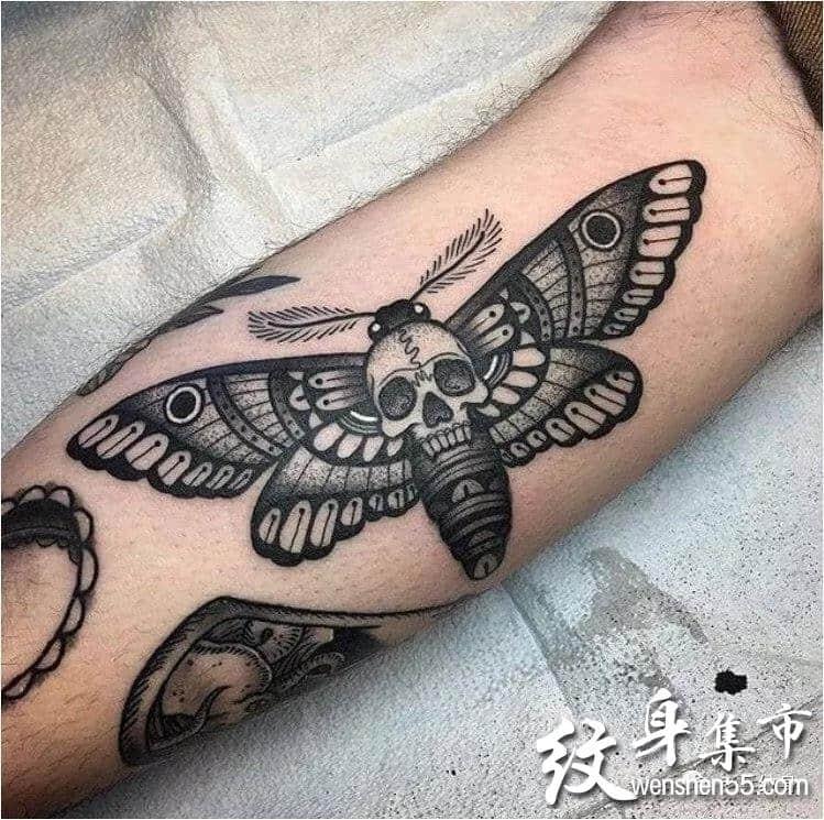 飞蛾纹身,飞蛾纹身手稿,飞蛾纹身手稿图案