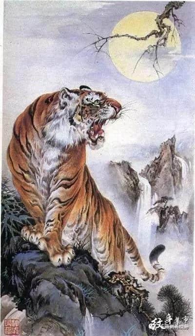 老虎满背纹身,老虎满背纹身手稿,老虎满背纹身手稿图案
