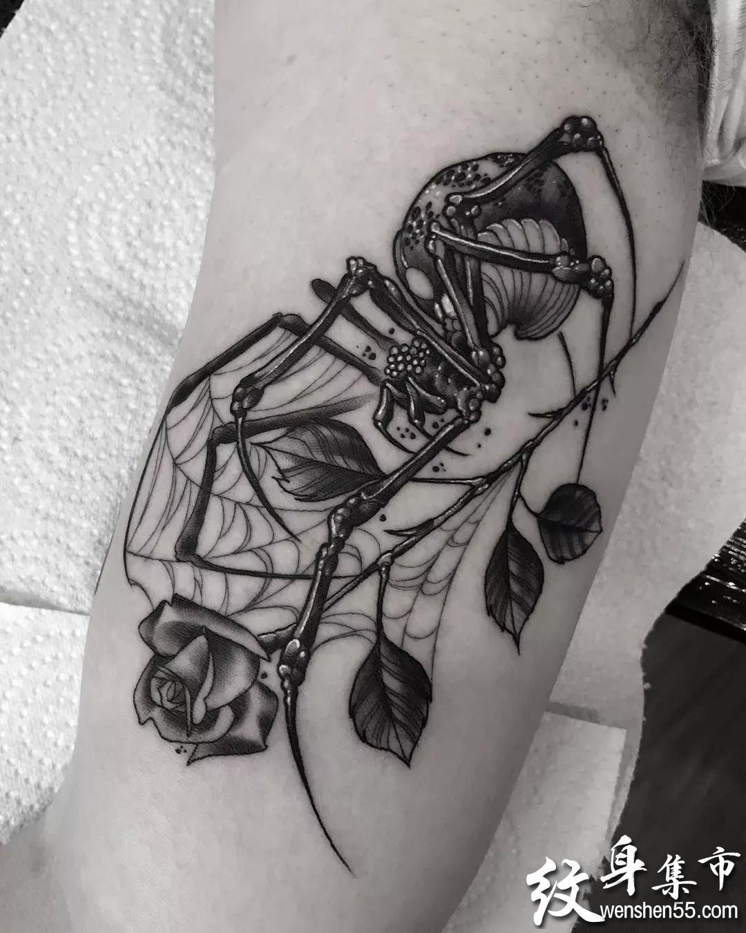 暗黑蜘蛛纹身,暗黑蜘蛛纹身手稿图案