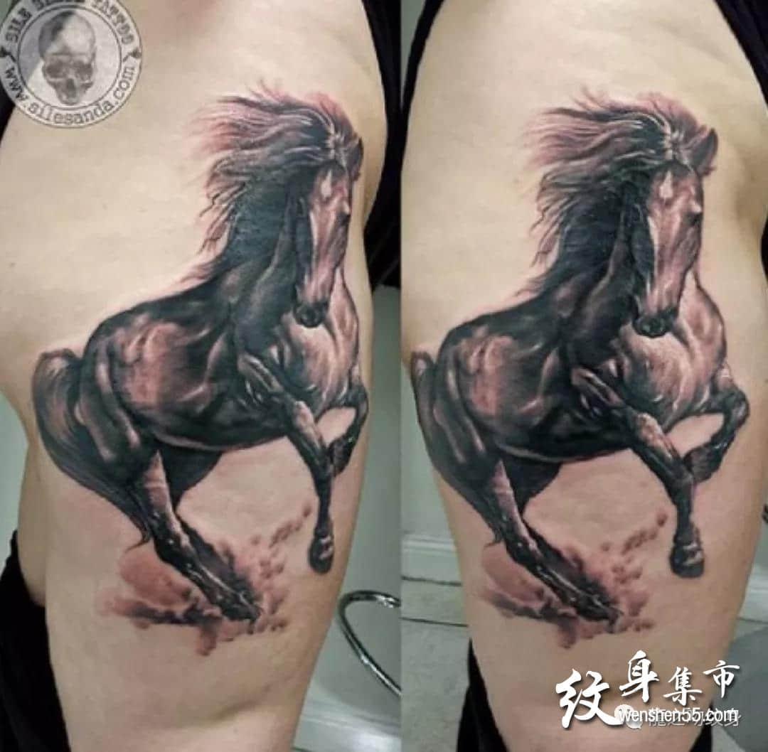 马纹身,马纹身手稿,马纹身手稿图案