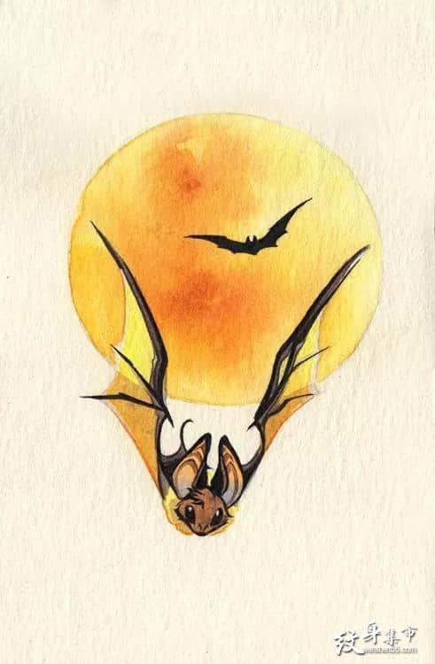 蝙蝠纹身,蝙蝠纹身手稿,蝙蝠纹身手稿图案