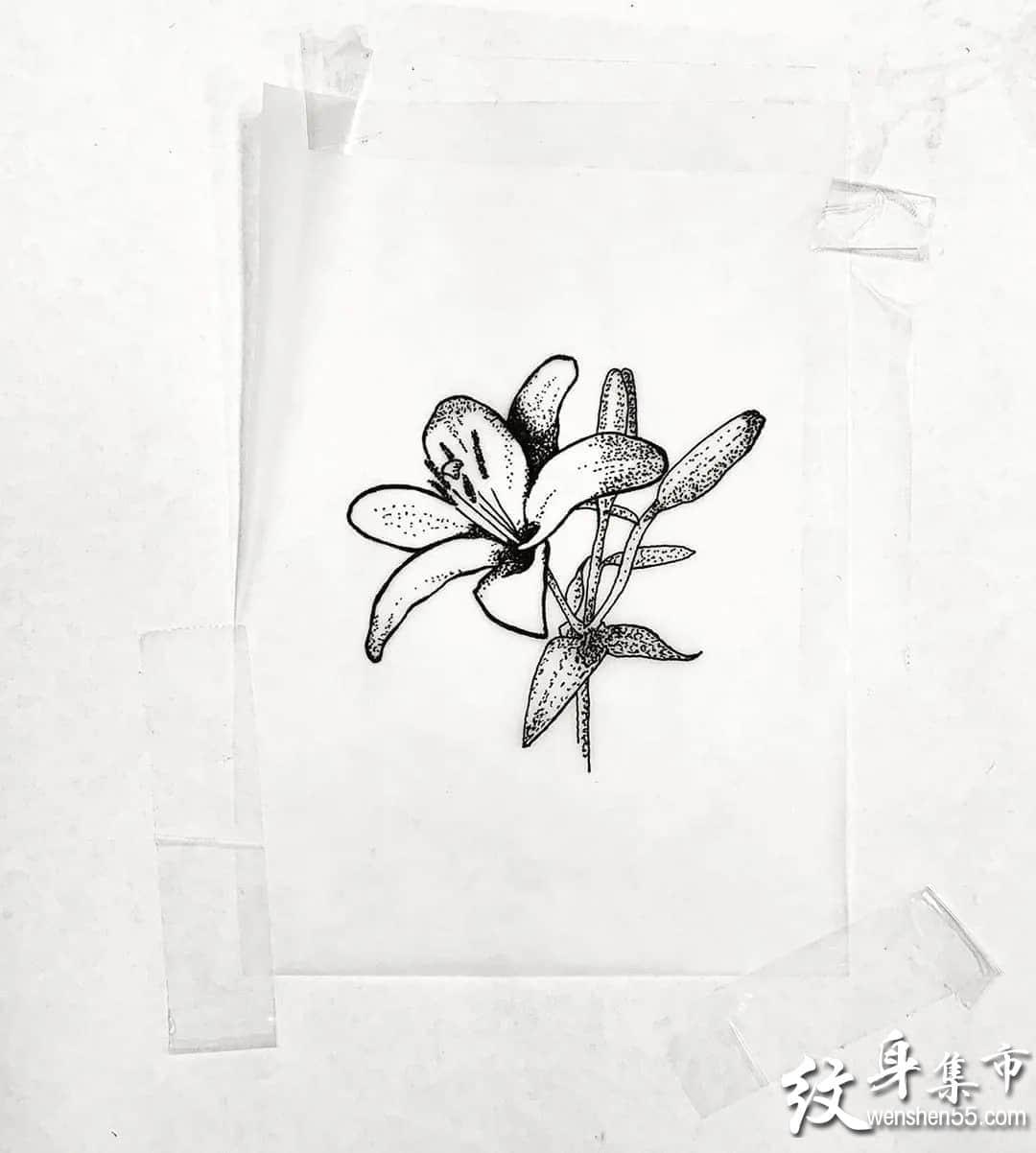 百合花纹身,百合花纹身手稿,百合花纹身手稿图案