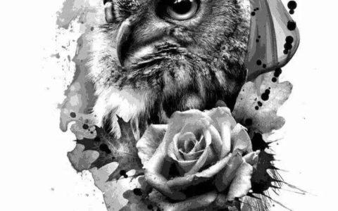 猫头鹰纹身,猫头鹰纹身手稿,猫头鹰纹身手稿图案
